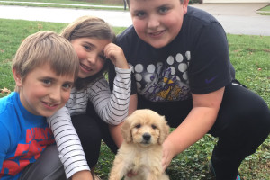 get-a-puppy-family-featured